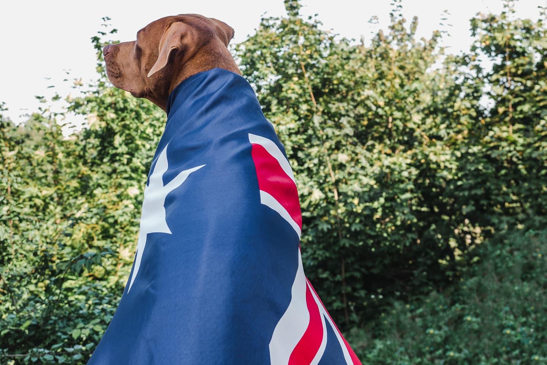Sweet dog wearing Australia's flag